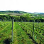 crutzberg wijndomein