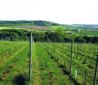 Wijndomein Crutzberg (Vignoble)