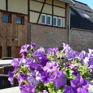vakantiehuis Middelhof