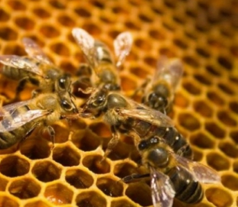 Apiculture (miel) 'Potpourri'