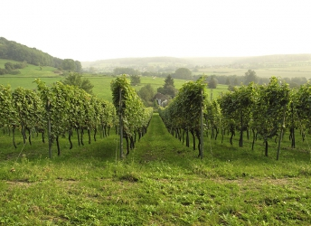 Wein in der Voerregion