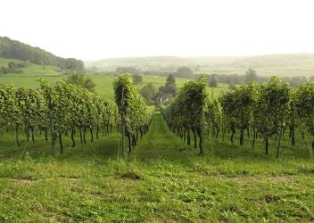 Wein in der Voerregion
