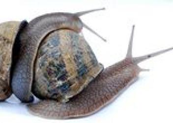Slakkenkwekerij Sint Heribertus