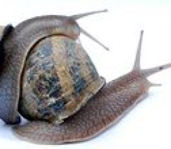 Snailfarm Sint Heribertus