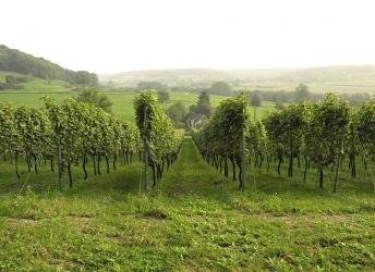 Le vin dans la région de la Voer